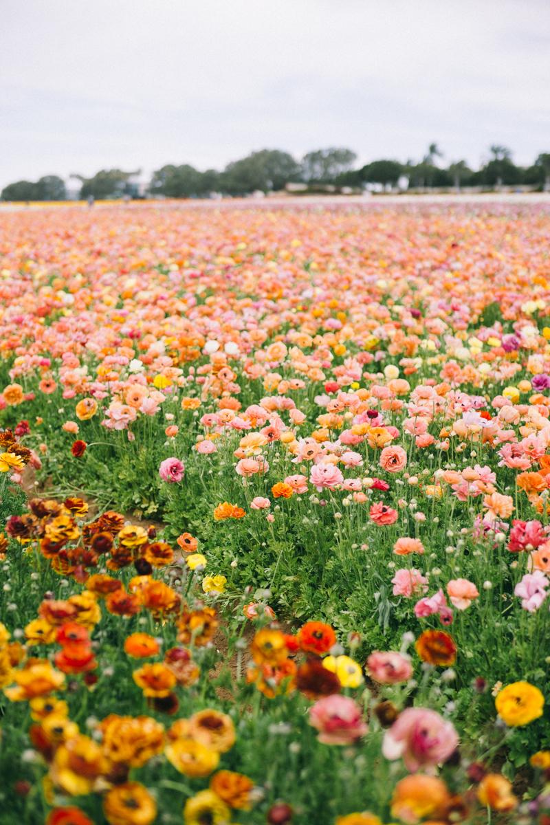 san diego flower farm